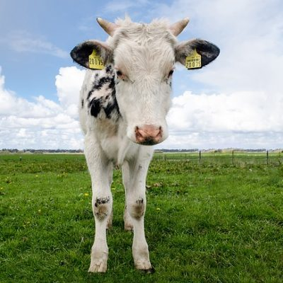 Restriction in use of antibiotics in food animals